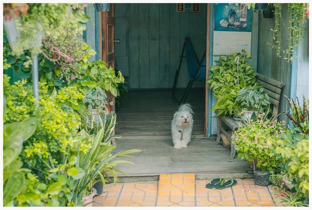 Ngôi nhà xanh mát bóng cây của cô giáo nghỉ hưu khiến ai cũng mơ về xóm nhỏ, phố nhỏ, nhà tôi ở đó - Ảnh 11.