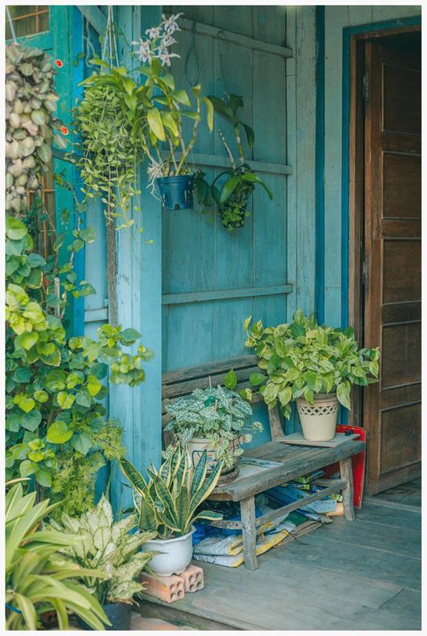 Ngôi nhà xanh mát bóng cây của cô giáo nghỉ hưu khiến ai cũng mơ về xóm nhỏ, phố nhỏ, nhà tôi ở đó - Ảnh 4.