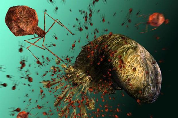 Virus có thể lây nhiễm và giết chết siêu vi khuẩn, tại sao không dùng chúng thay cho thuốc kháng sinh đã mất tác dụng? - Ảnh 2.