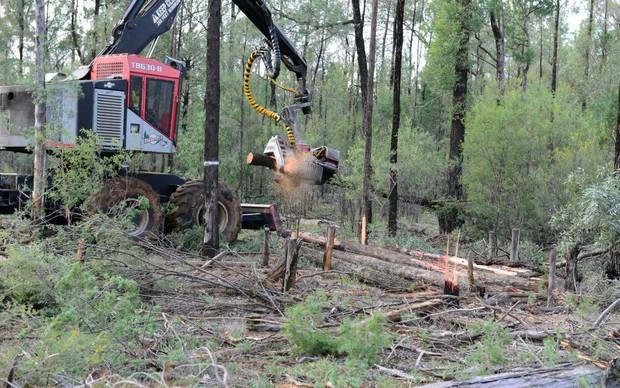 Choáng với lượng cây rừng mất đi trên Trái đất: 1 phút hụt 40 sân bóng đá - Ảnh 4.