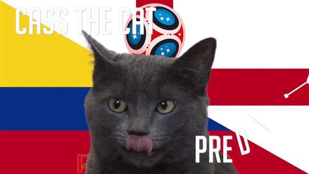Dự đoán kết quả tỉ số trận Colombia vs Anh hôm nay của nhà tiên tri mèo Cass - Ảnh 1.