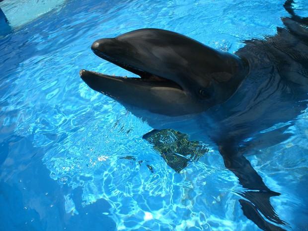 Cá heo lai cá voi - lần đầu tiên khoa học tìm thấy loài lai kỳ lạ này đấy! - Ảnh 3.