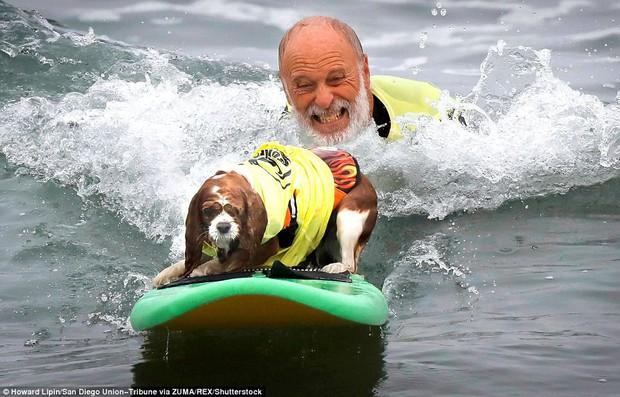 Mỹ: Boss cưng toàn quốc nô nức tham dự cuộc thi lướt sóng dành cho chó tại bãi biển Imperia - Ảnh 4.