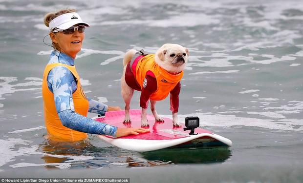 Mỹ: Boss cưng toàn quốc nô nức tham dự cuộc thi lướt sóng dành cho chó tại bãi biển Imperia - Ảnh 6.