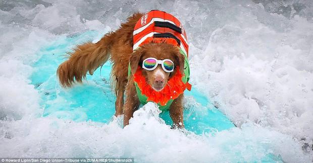 Mỹ: Boss cưng toàn quốc nô nức tham dự cuộc thi lướt sóng dành cho chó tại bãi biển Imperia - Ảnh 7.