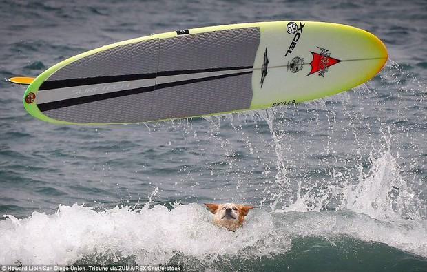 Mỹ: Boss cưng toàn quốc nô nức tham dự cuộc thi lướt sóng dành cho chó tại bãi biển Imperia - Ảnh 8.