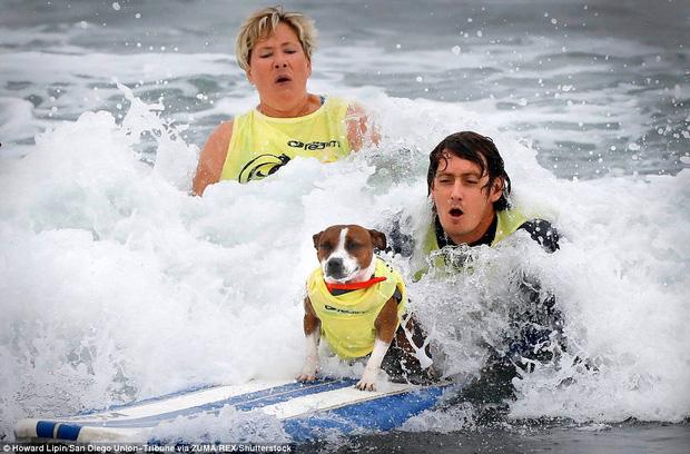 Mỹ: Boss cưng toàn quốc nô nức tham dự cuộc thi lướt sóng dành cho chó tại bãi biển Imperia - Ảnh 9.