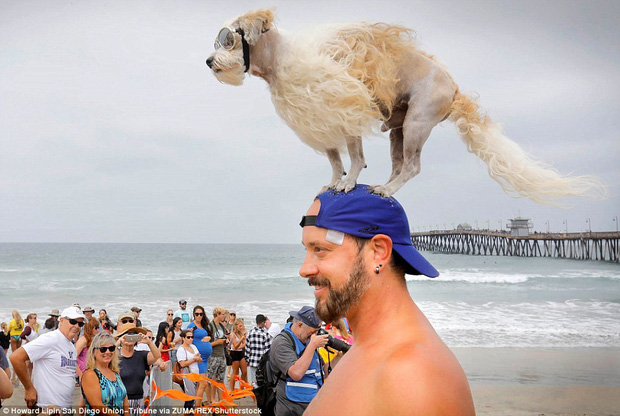 Mỹ: Boss cưng toàn quốc nô nức tham dự cuộc thi lướt sóng dành cho chó tại bãi biển Imperia - Ảnh 10.