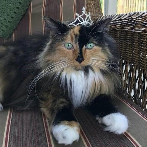 Chiến dịch tranh cử độc nhất tại Mỹ: Con mèo 9 tuổi lên chức thị trưởng sau khi vượt qua các đối thủ chó, công, dê, gà - Ảnh 2.