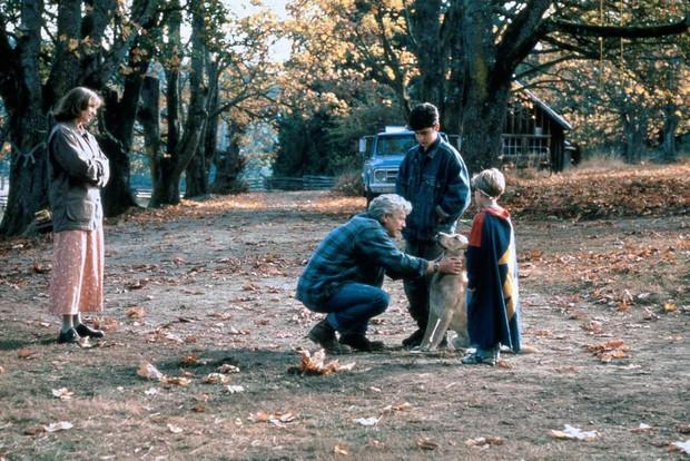 7 bộ phim giáo dục kỹ năng sinh tồn hữu ích cho mọi gia đình! - Ảnh 2.