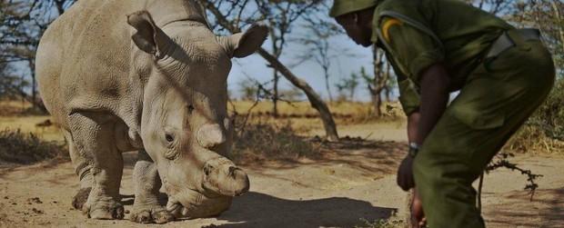 Thành quả đột phá này sẽ giúp loài tê giác trắng Bắc Phi thoát cảnh tuyệt chủng - Ảnh 5.