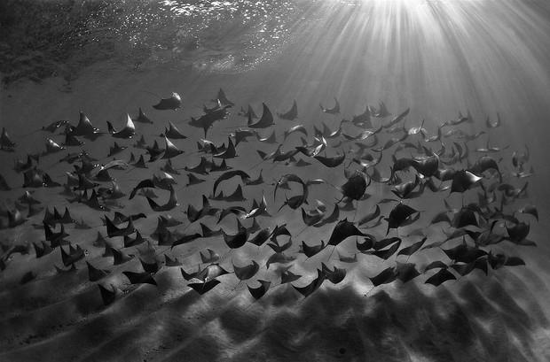 Những hình ảnh dưới nước đẹp đến nghẹt thở trong cuộc thi Underwater Photographer Of The Year 2018 - Ảnh 5.