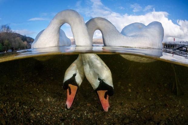 Những hình ảnh dưới nước đẹp đến nghẹt thở trong cuộc thi Underwater Photographer Of The Year 2018 - Ảnh 9.