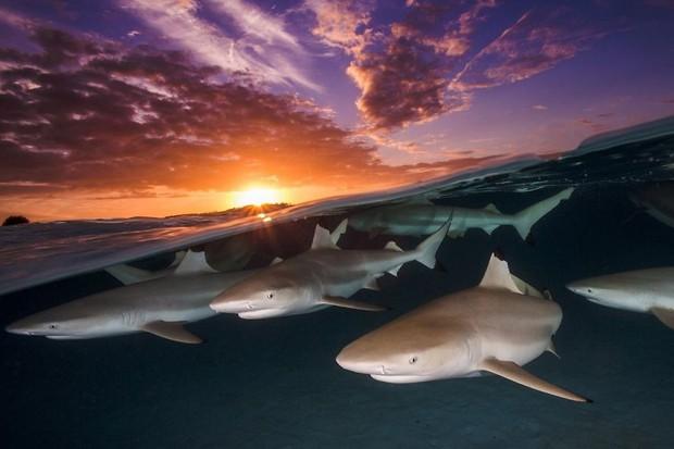 Những hình ảnh dưới nước đẹp đến nghẹt thở trong cuộc thi Underwater Photographer Of The Year 2018 - Ảnh 11.