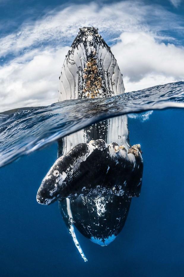 Những hình ảnh dưới nước đẹp đến nghẹt thở trong cuộc thi Underwater Photographer Of The Year 2018 - Ảnh 13.
