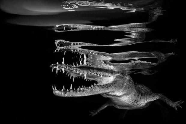 Những hình ảnh dưới nước đẹp đến nghẹt thở trong cuộc thi Underwater Photographer Of The Year 2018 - Ảnh 17.