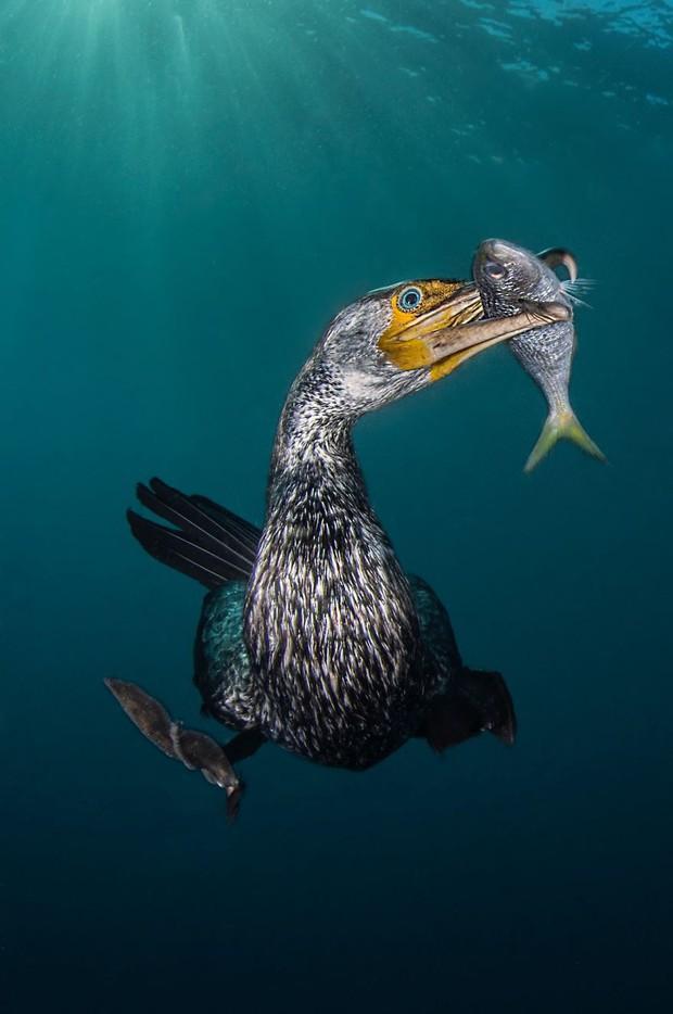 Những hình ảnh dưới nước đẹp đến nghẹt thở trong cuộc thi Underwater Photographer Of The Year 2018 - Ảnh 21.