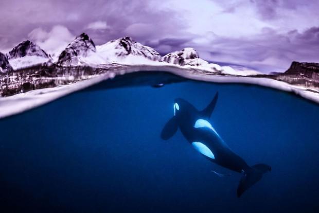 Những hình ảnh dưới nước đẹp đến nghẹt thở trong cuộc thi Underwater Photographer Of The Year 2018 - Ảnh 25.