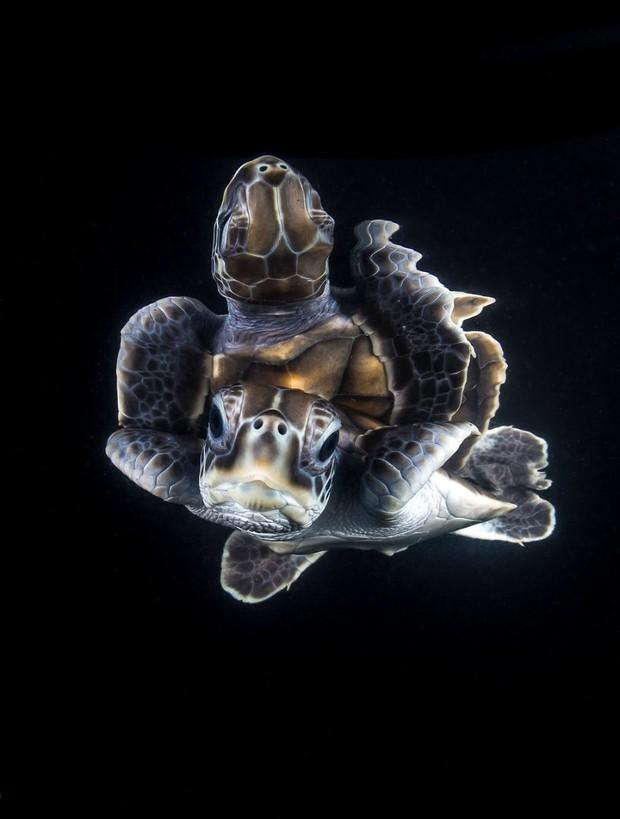 Những hình ảnh dưới nước đẹp đến nghẹt thở trong cuộc thi Underwater Photographer Of The Year 2018 - Ảnh 27.