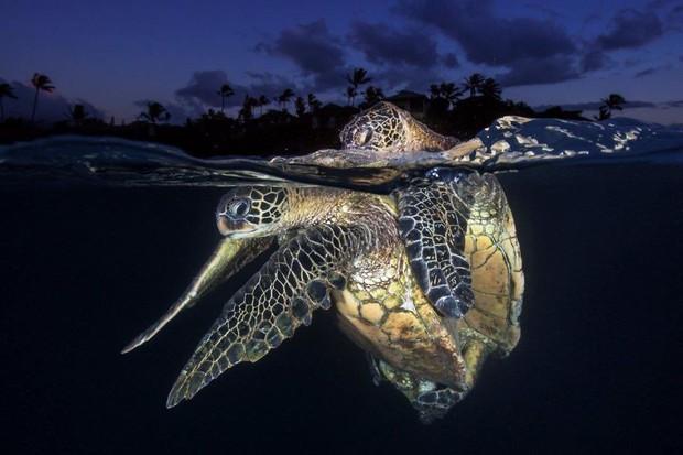 Những hình ảnh dưới nước đẹp đến nghẹt thở trong cuộc thi Underwater Photographer Of The Year 2018 - Ảnh 39.