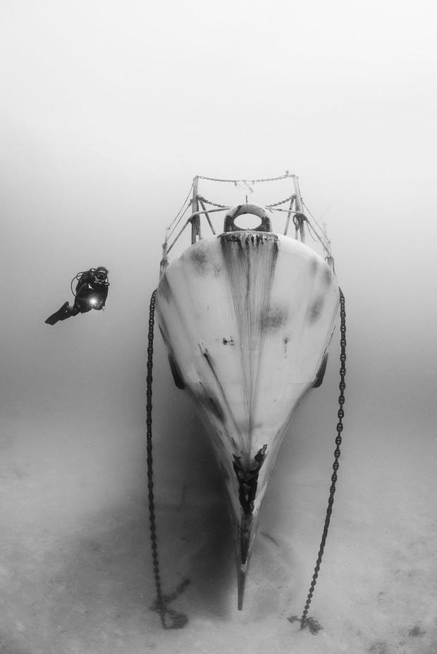 Những hình ảnh dưới nước đẹp đến nghẹt thở trong cuộc thi Underwater Photographer Of The Year 2018 - Ảnh 36.