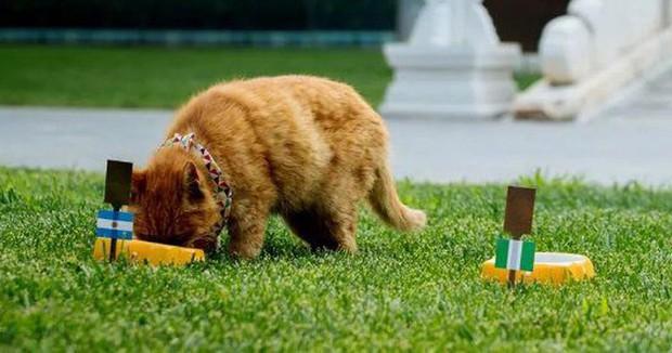 Chú mèo tiên tri tại Trung Quốc dự đoán đúng 7 trên 10 trận World Cup đột ngột qua đời - Ảnh 1.