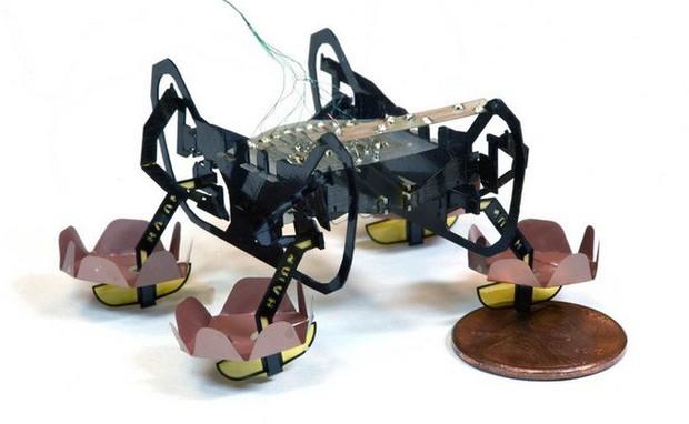 Harvard phát triển thành công robot đổ bộ siêu nhỏ có thể bơi lội, đi bộ dưới nước và lên bờ thành thạo - Ảnh 1.
