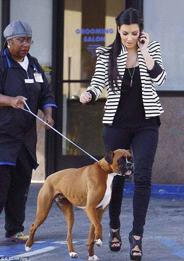 Kim Kardashian bỏ hơn 300 triệu mua bộ phận kín hàng giả cho cún cưng bị triệt sản - Ảnh 1.
