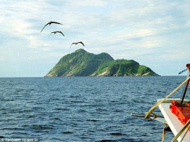 Hòn đảo nguy hiểm bậc nhất thế giới, cấm con người đặt chân lên tại Brazil: 1 mét vuông 5 con rắn - Ảnh 1.