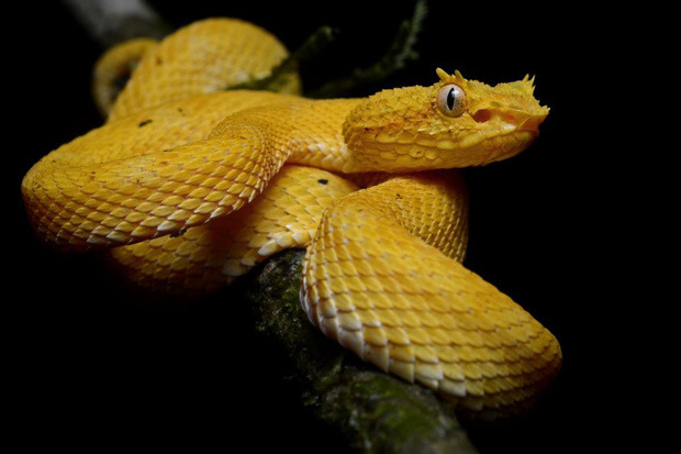 Hòn đảo nguy hiểm bậc nhất thế giới, cấm con người đặt chân lên tại Brazil: 1 mét vuông 5 con rắn - Ảnh 3.