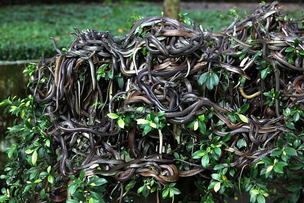 Hòn đảo nguy hiểm bậc nhất thế giới, cấm con người đặt chân lên tại Brazil: 1 mét vuông 5 con rắn - Ảnh 2.