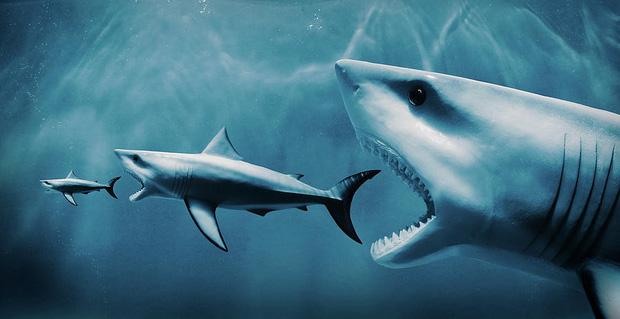 Xem cá mập khổng lồ The Meg ai cũng rùng mình xanh mặt với chi tiết kinh hãi này - Ảnh 2.