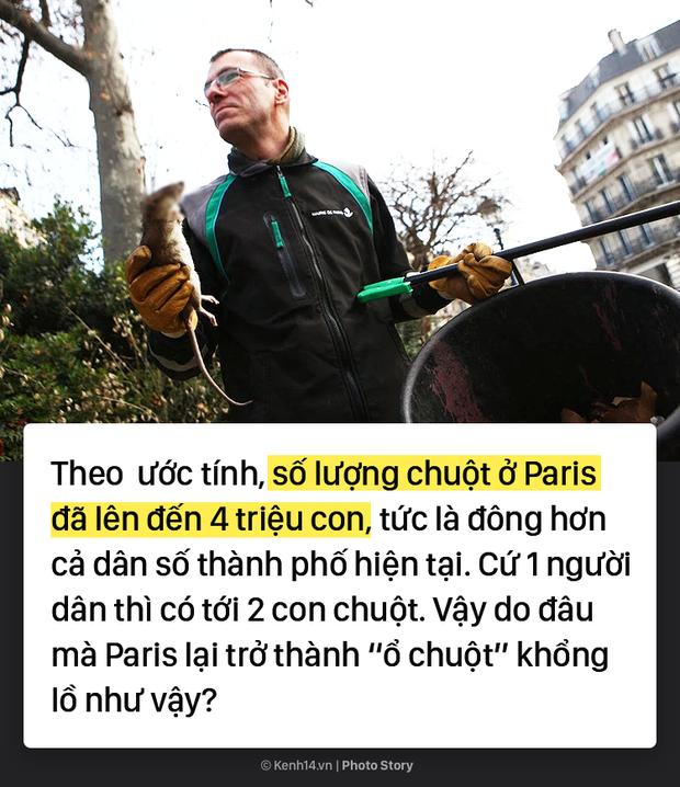 Kinh hoàng cơn bão chuột cống kéo đến khắp kinh đô ánh sáng Paris - Ảnh 3.