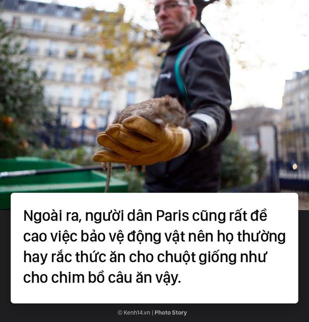 Kinh hoàng cơn bão chuột cống kéo đến khắp kinh đô ánh sáng Paris - Ảnh 11.