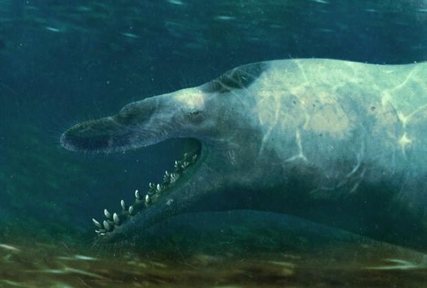 Đây là 5 con quái vật tiền sử cũng xứng đáng được lên phim giống Megalodon - Ảnh 5.