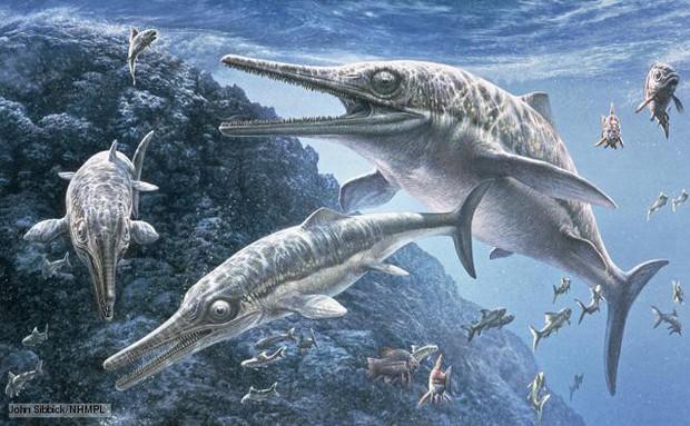 Đây là 5 con quái vật tiền sử cũng xứng đáng được lên phim giống Megalodon - Ảnh 1.