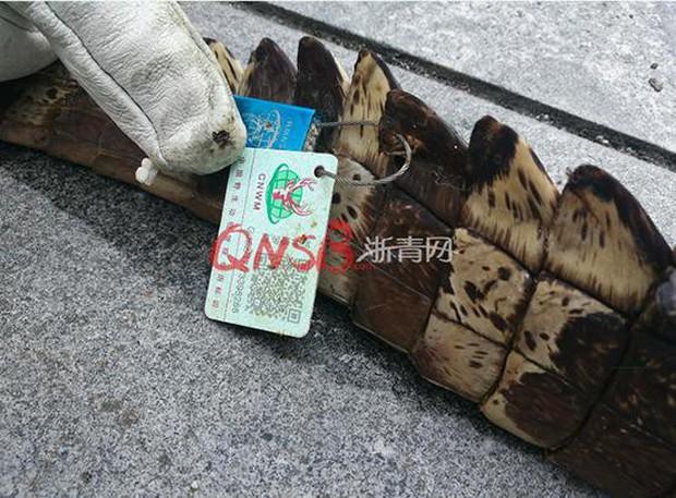 Đặt mua thực phẩm chức năng trên mạng, người phụ nữ nhận được một con cá sấu ship đến tận cửa nhà - Ảnh 3.