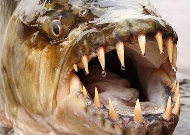 Tung tăng dưới nước, nhưng những loài cá này còn là sát thủ cực nguy hiểm trên cạn - Ảnh 9.