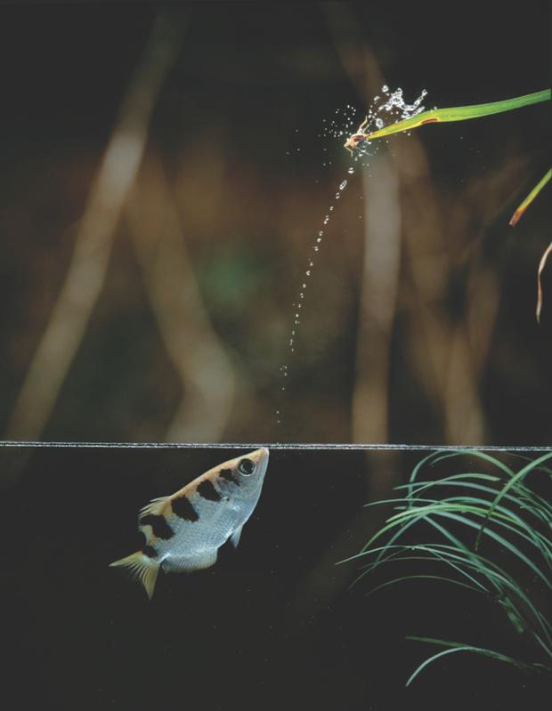 Tung tăng dưới nước, nhưng những loài cá này còn là sát thủ cực nguy hiểm trên cạn - Ảnh 2.