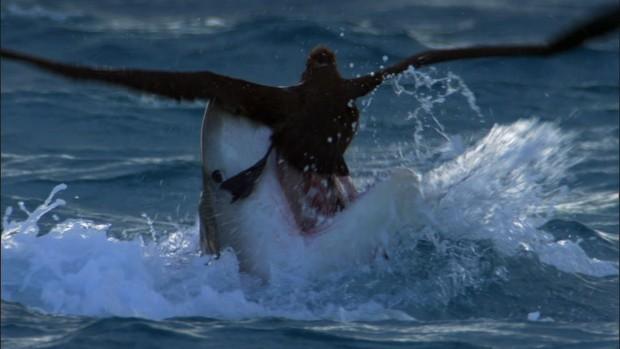 Tung tăng dưới nước, nhưng những loài cá này còn là sát thủ cực nguy hiểm trên cạn - Ảnh 4.