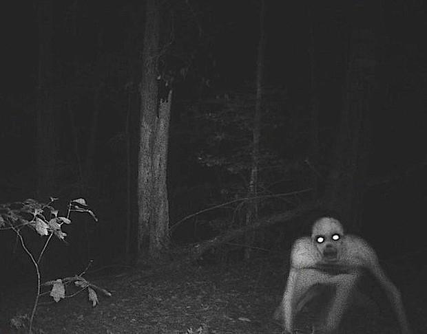 Sứa bờm sư tử khổng lổ, quỷ rừng Louisiana: Những sinh vật kỳ bí và lạ lùng từng khiến cư dân mạng đau đầu đặt ra hàng trăm câu hỏi - Ảnh 2.