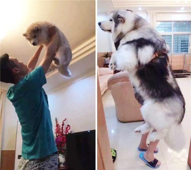 Cháu gái khoe ảnh ngoại thân thiết bên chú pet nhưng cộng đồng mạng chỉ cười ngất bởi dáng ngủ siêu lầy lội của chú chó cưng - Ảnh 4.