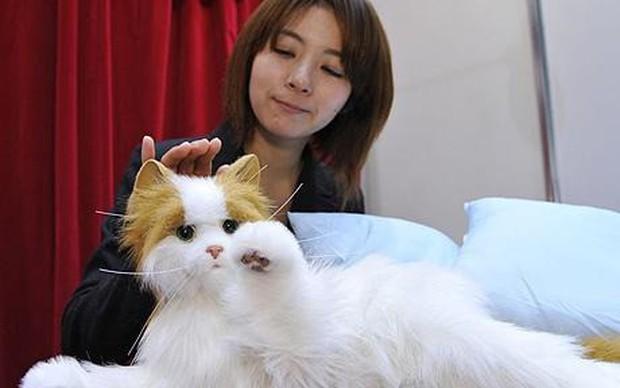 Đâu chỉ có Doraemon, bây giờ người Nhật nào cũng có thể sở hữu mèo máy robot hết cả đấy thôi! - Ảnh 1.