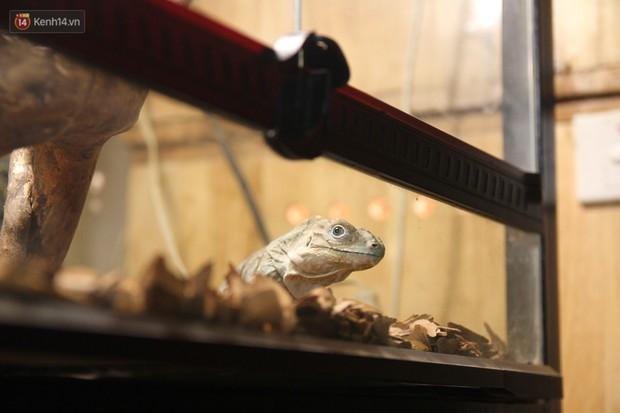 Ông bố trẻ ở Hà Nội và bộ sưu tập những con vật nhìn thôi đã sợ: Đủ các loài rắn, nhện, ếch cho đến rồng đất - Ảnh 9.