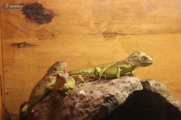 Ông bố trẻ ở Hà Nội và bộ sưu tập những con vật nhìn thôi đã sợ: Đủ các loài rắn, nhện, ếch cho đến rồng đất - Ảnh 10.