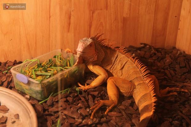 Ông bố trẻ ở Hà Nội và bộ sưu tập những con vật nhìn thôi đã sợ: Đủ các loài rắn, nhện, ếch cho đến rồng đất - Ảnh 7.