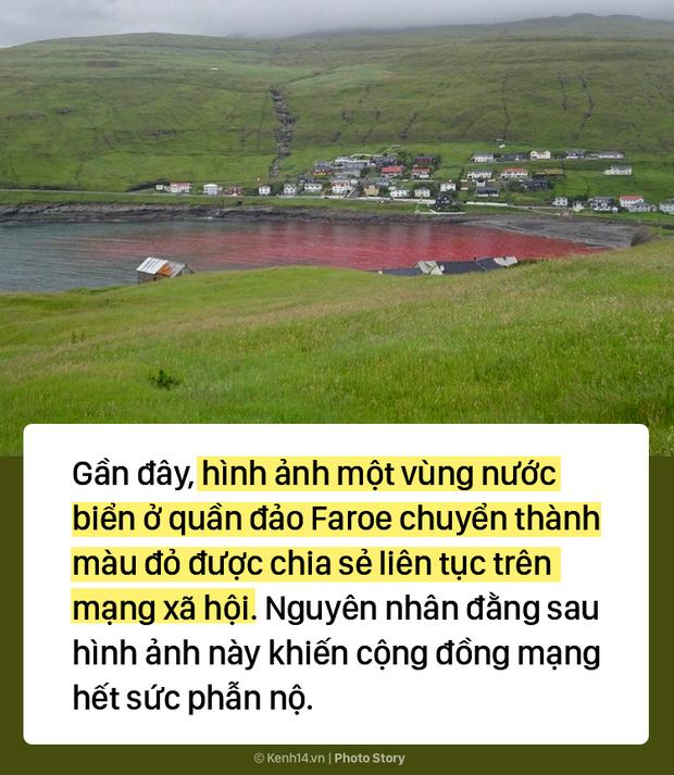 Kỳ dị: Nước biển hóa màu đỏ do máu cá voi tại vùng đảo Faroe - Ảnh 1.
