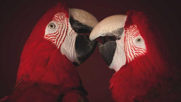 Vẹt là loài cực kỳ thông minh nhưng vì sao chúng có khả năng đó? - Ảnh 1.