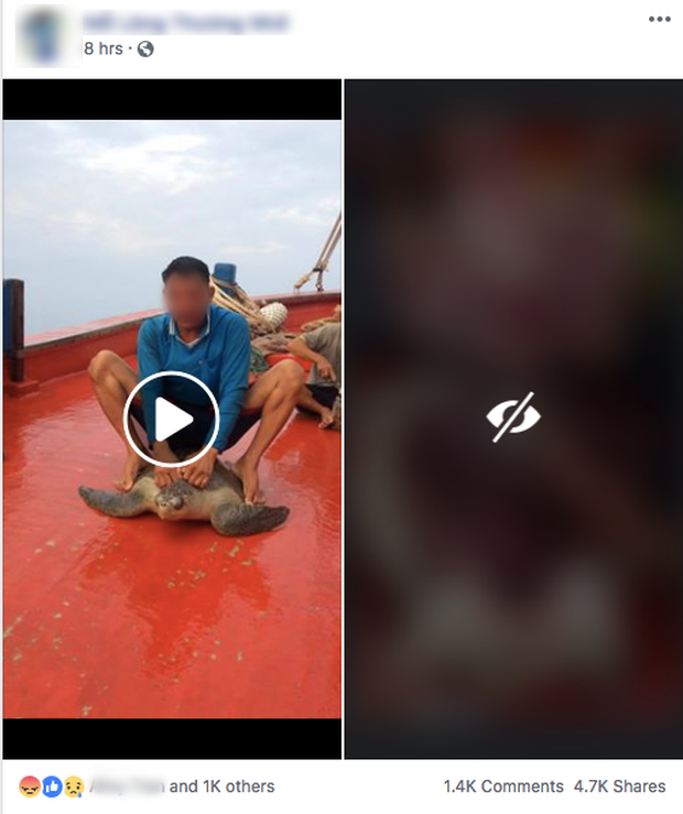 Cộng đồng lên án mạnh mẽ những đoạn clip ngư dân quay cảnh hành hạ, cưỡi rùa biển rồi giết hại tàn nhẫn - Ảnh 2.
