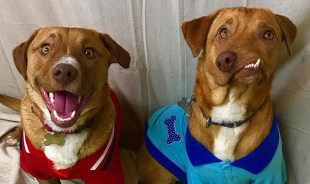 Chú chó xấu xí với khuôn mặt biến dạng trở thành nguồn cảm hứng sống của nhiều người nhờ điều đặc biệt này - Ảnh 2.